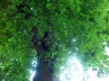 we chose a spot beneath an oak tree